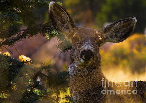 Surprise  by Barbara Schultheis