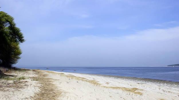 Surreal Beach by Linda C Johnson