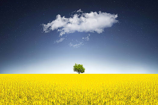 Surreal Canola Field by Bess Hamiti
