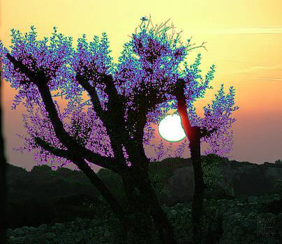 Dee Flouton - Surreal Sunset