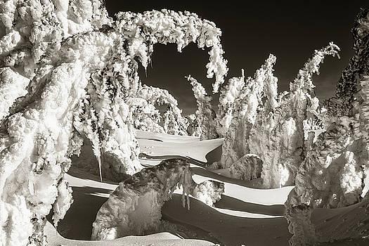 Surreal Wonderscape by Scott Wheeler