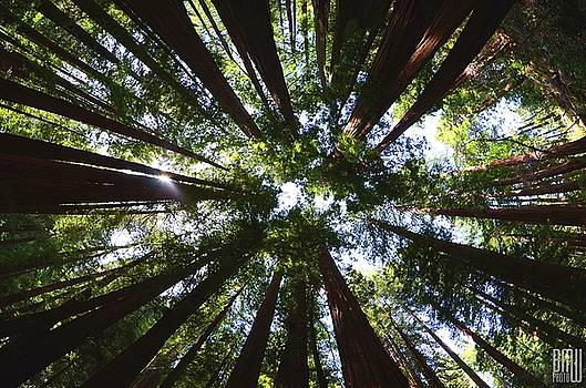 Surrounded by Redwoods by Benjamin Weilert