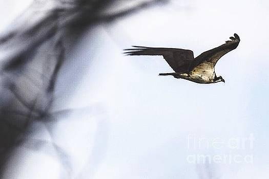 Surveying the Skies by Stephanie  Varner