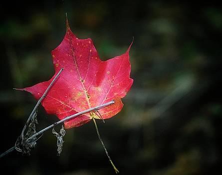 Garvin Hunter - Suspended Maple Leaf