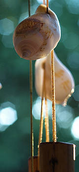 Suspended Shells, Wind Chime, Balcony Garden, Hunter Hill, Hager by James Oppenheim