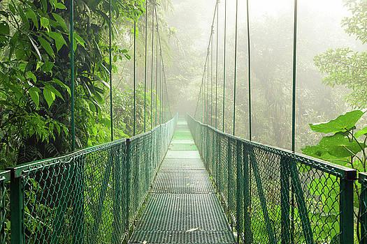 Suspension bridge in rainforest by Juhani Viitanen