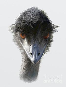 Suspicious Emu Stare by Ivana Westin
