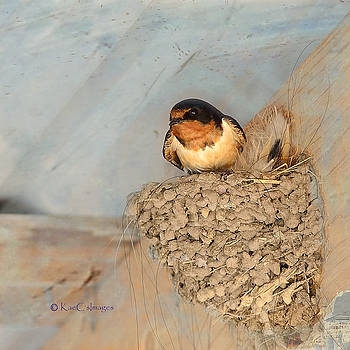 Swallow on Nest by Kae Cheatham