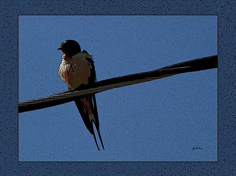 Swallow Perched at Eclipse Dusk   by Gretchen Wrede