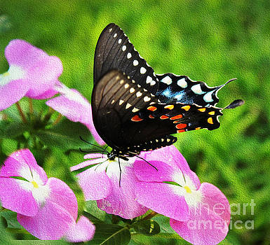 Swallow Tail Butterfly by Judy Palkimas