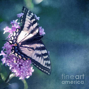 Swallowtail and Lilac by Priska Wettstein