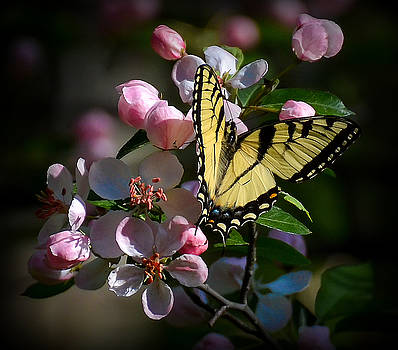 Swallowtail Blossoms by Kerry Hauser