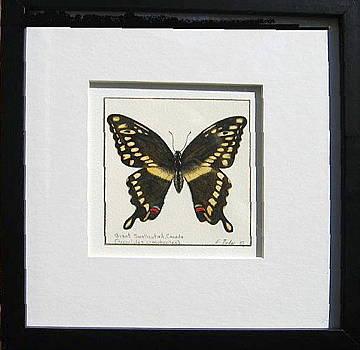 Swallowtail butterfly by Elizabeth H Tudor