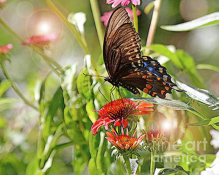 Swallowtail Butterfly on Cone Flower by Luana K Perez