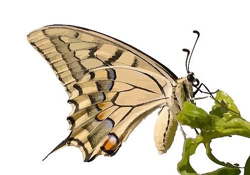 Tracey Harrington-Simpson - Swallowtail Butterfly Vector Isolated