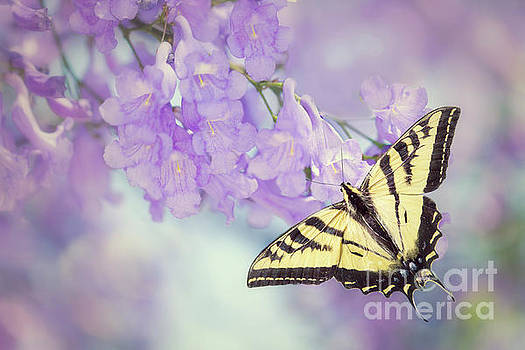 Susan Gary - Swallowtail on Purple Flowers