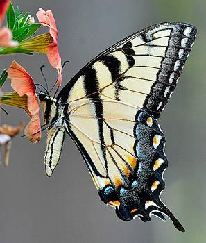 Swallowtail Orange Flower by William Jobes