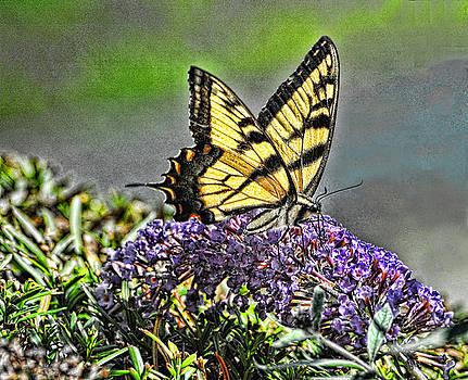 Edward Sobuta - Swallowtail Pastel