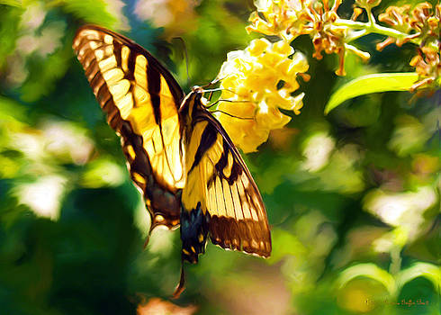 Swallowtail by Patricia Griffin Brett