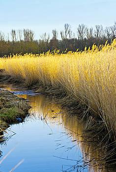 Swamp by Phobeke Photographie Bernd Keller