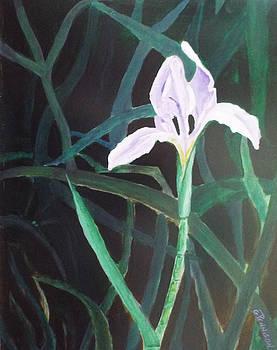 Swamp Bloom by Gilbert Pennison
