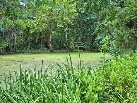 Swamp Bridge by Michael Colgate