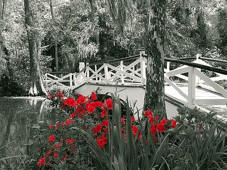 Swamp Flowers by Ree Reid