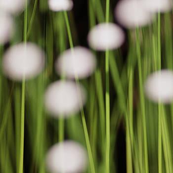 Swamp Flowers by Rod Kaye