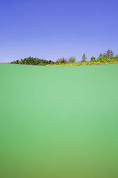 Swamp by Gemma Silvestre