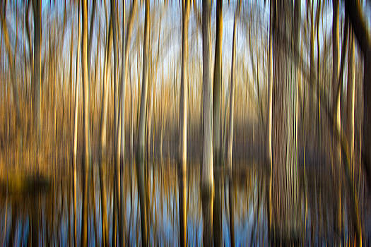 Swamp by Jackie Novak