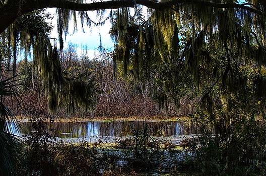 Swamp Life by Joseph Caban