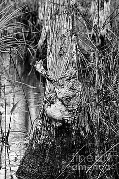Bob Phillips - Swamp Monster 2