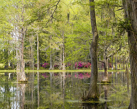 Swamp Reflections by Cindy Adams