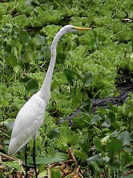 Swamp Stalker 2 by Amber Bobbitt