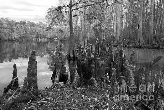 Swamp Stump by Blake Yeager