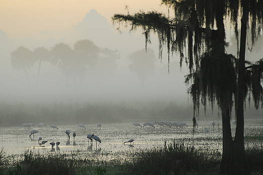 Swamp Sunrise by Uli Degwert