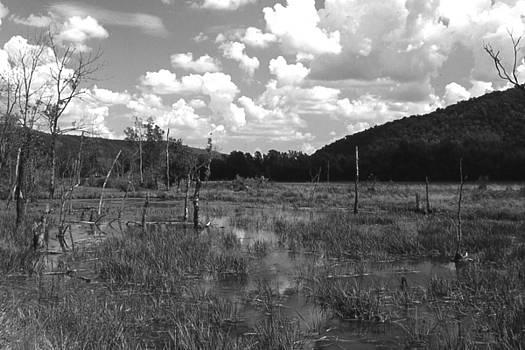 SwampOEM by Curtis J Neeley Jr