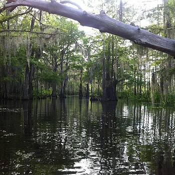 Swamps Are Not So Bad by Gabrielle Coleman