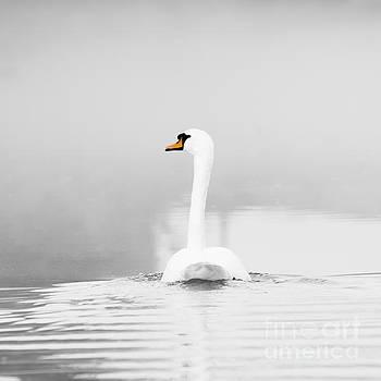 Swan and mist by Steev Stamford