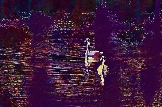 Swan Bird Wildlife Pond Outdoors  by PixBreak Art