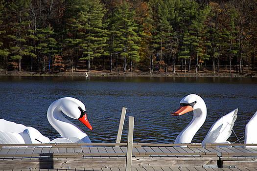 Swan Boats by Joanna Madloch