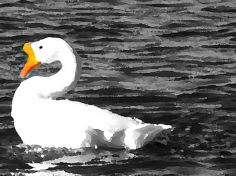 Colette Merrill - Swan
