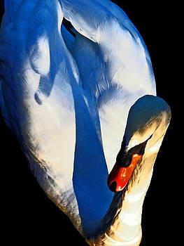 Swan by Daniele Smith