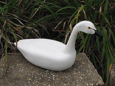 Swan-derful by Kevin F Heuman