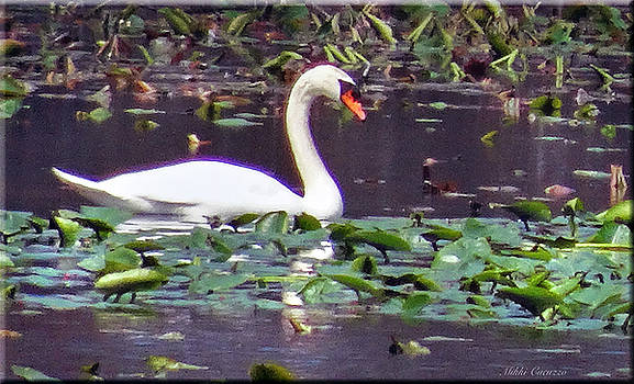 Swan enjoying spring by Mikki Cucuzzo