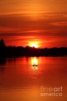 Swan Heart Sunset by Teresa McGill