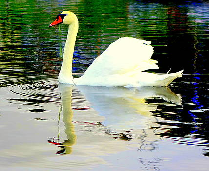 Who Is Afraid Of The Big White Swan  by Hilde Widerberg