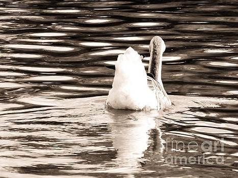 Robyn King - Swan Lake #2 Sepia