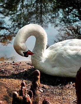 Jeff McJunkin - Swan Lake Elegance