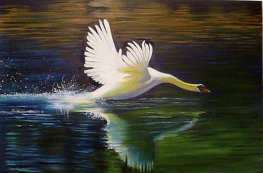 Swan Landing on the River by Janet Silkoff